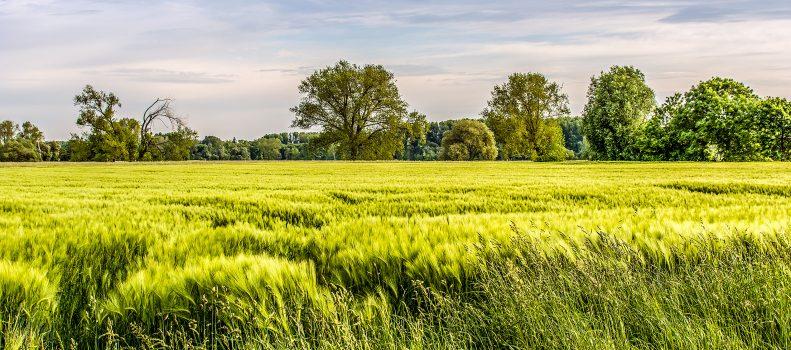 Die herrliche, niederrheinische Landschaft